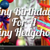 Animals Gone Viral: Tiny Birthday For A Tiny Hedgehog