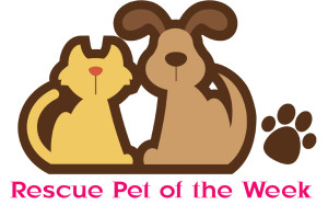 rescue pet of the week-3