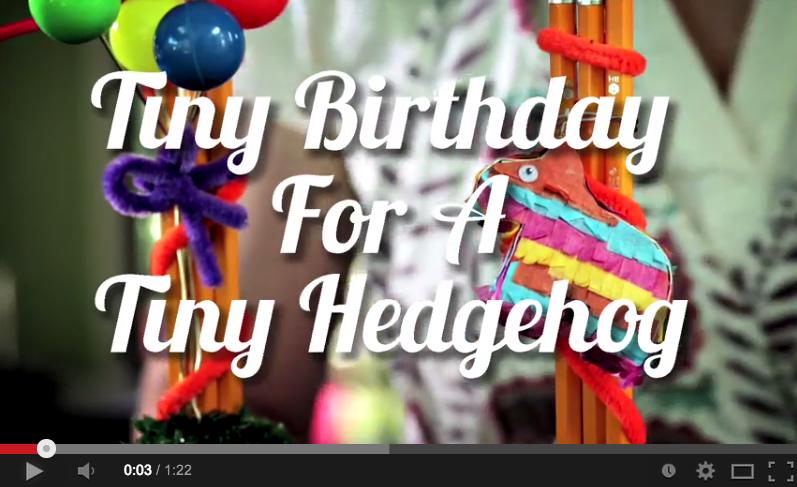 Hedgehog Bday