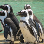 Penguins - Lehigh Valley Zoo