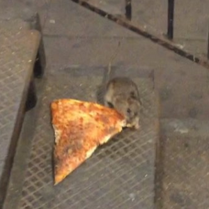 AGV-PizzaRat